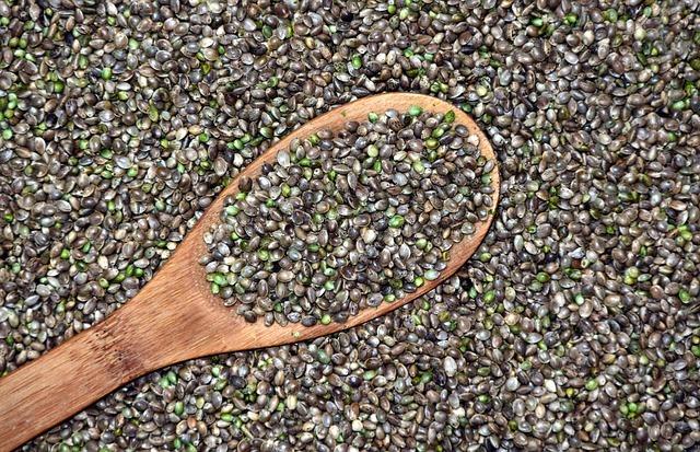 konopné semienka, Konopné semienka – prečo ich zaradiť do jedálnička?